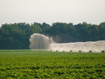 Understanding virtual water trade