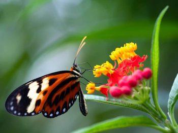 Improving descriptions of biodiversity dynamics